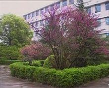 兴化市板桥高级中学