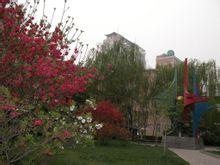 郑州市回民中学